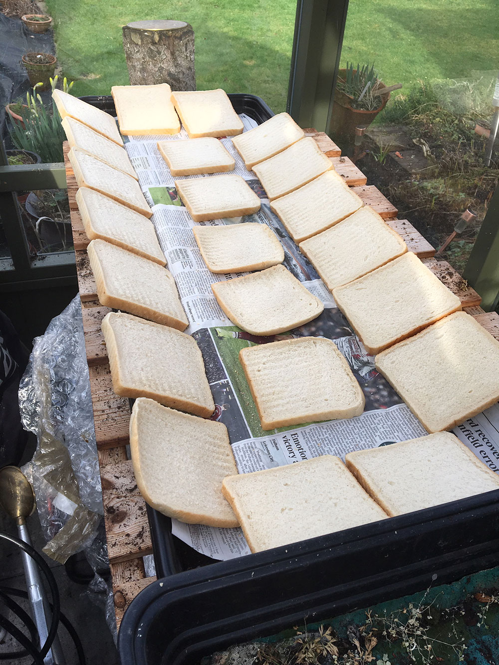 River Float Fishing with Punched Bread: Shhhhh!!! Don't tell Mrs Barnes. Alan likes to dry the bread and make it go stale and he does it by laying out slices on trays in his wife's greenhouse!